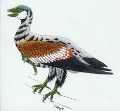 Sapeornis chaoyangensis