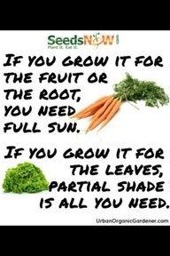 Garden tips...