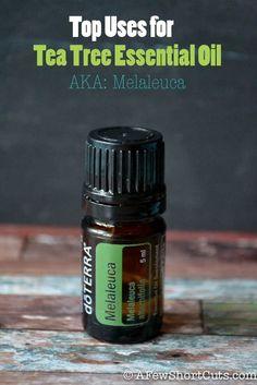 Top uses for Tea Tree Essential Oil AKA Melaleuca