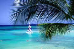Palm tree, swimmers and a boat at the beach.