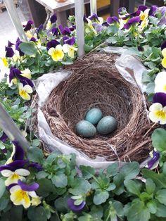 In der Erlebnisgärtnerei Hödnerhof finden wir immer wieder etwas tolles! 😍 Heute haben wir dieses Vogelnest gefunden!  #erlebnisgärtneri #hödnerhof #ausflugsziel #erleben #pflanzenwelt #gärtnerei #vogelnest #vogel #frühjahr #viola #cornuta #hornveilchen Grapevine Wreath, Grape Vines, Flott, Wreaths, Photo And Video, Instagram, Videos, Decor, Little Birds