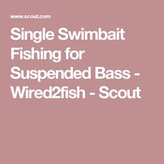 Single Swimbait Fishing for Suspended Bass - Wired2fish - Scout