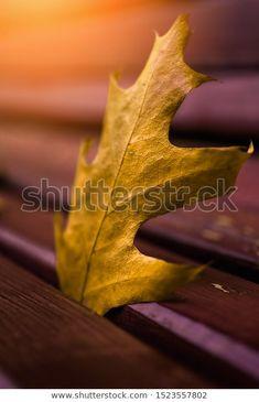 Autumn Yellow Fallen Leaf On Park: стоковые изображения в HD и миллионы других стоковых фотографий, иллюстраций и векторных изображений без лицензионных платежей в коллекции Shutterstock.  Ежедневно добавляются тысячи новых высококачественных фотографий. Pictures For Sale