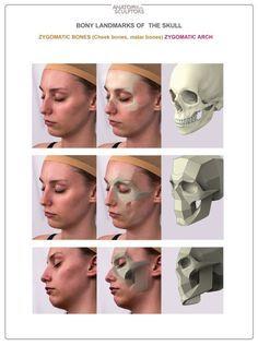 Exceptional Drawing The Human Figure Ideas. Staggering Drawing The Human Figure Ideas. Facial Anatomy, Head Anatomy, Anatomy Poses, Anatomy Study, Body Anatomy, Anatomy Art, Human Anatomy For Artists, Human Anatomy Drawing, Human Reference
