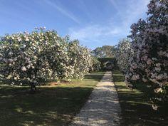 """Mount Mitchell Estate"" - One of Australia's finest gardens in Lexton, VIC"