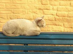 Um gato no Caminito, em Buenos Aires.