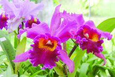 imagens de flores do brasil - Pesquisa Google