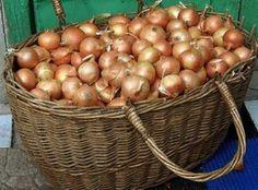 3 секрета выращивания идеального лука Summer House Garden, Home And Garden, Grape Vineyard, Farm Gardens, Fresh Fruit, Homesteading, Onion, Garden Design, Vegetables