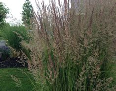 If your garden is getting a little tired, or just has never had any pizzazz, take a design trick from the pros. Add ornamental grasses! They contemporize any garden style, are easy to maintain and... Read More