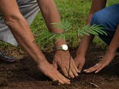 It is the time to show your love to the nature. Lets take a pledge to plant atleast one tree on this World Environment Day.       Courtesy: Back2College.in