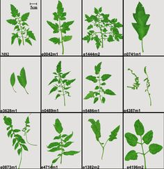 Different Trees And Their Names Leaves Images Quiz 640 x 480