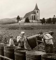 fotograficas oleograficas: Clásicos #13: Robert Doisneau (Francia). Hunawihr, la vendimia 1945(Francia)