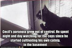 i love cat humor