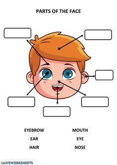 Body Parts Preschool Activities, Preschool Cutting Practice, Senses Preschool, Body Preschool, Grammar Activities, Back To School Activities, Kindergarten Activities, English Grammar For Kids, Good Grammar