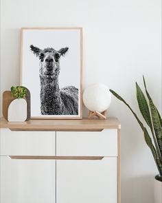 Original photographic print of a llama called Lorenzo! This cheeky guy will bring a smile to your face everyday! Perfect for the bedroom, nursery or home office! Wall Art Prints, Fine Art Prints, Framed Prints, Modern Prints, Modern Wall Art, Highland Cow Art, Paper Plants, Minimalist Art, Box Art