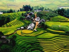 The Sa Pa terraced fields created by the hands of the ethnic minorities, have appeared for hundreds of years (Sapa Terraced rice field - Vietnam - Liger travel)