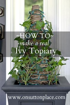 How to Make a Real Ivy Topiary-- classic and beautiful! #gardening
