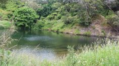 Perfect swimming hole in the Coromandel - the Ohinemuri River, Karangahake Gorge. Swimming Holes, Rivers, New Zealand, Places, Water, Check, Travel, Outdoor, Beautiful