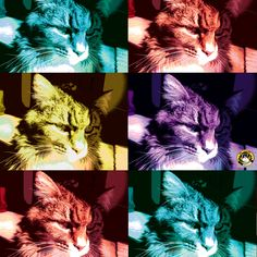"""The world is but a canvas to our imagination."" -Henry David Thoreau  @Tom John Cat #thetomcatlife #tomcat #tomcatart #art #mainecoon  #cat #kitty #popart #imagination"