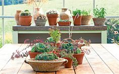 Sarah Raven picks her favourite indoor plants for you to enjoy the garden   without leaving the comfort of your home.