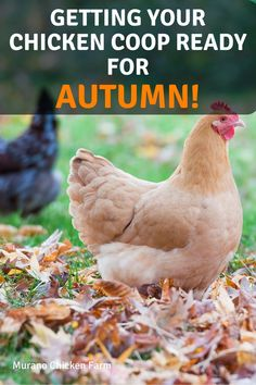 Food For Chickens, Raising Backyard Chickens, Keeping Chickens, Pet Chickens, Urban Chickens, Small Chicken Coops, Backyard Chicken Coops, Diy Chicken Coop, Chicken Lady