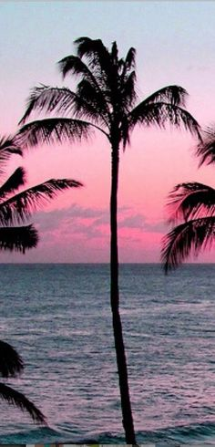 Pic of the Day...No Palms About It ------------------- #beach #palmtrees #tropics #sunset #sundown #sunrise #beaches