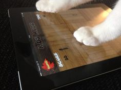 Childrens toys and iPad games for your cat.