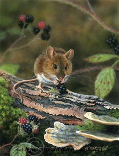 Painting by artist Nigel Artingstall, Wood Mouse. Woodland Creatures, Cute Creatures, Woodland Animals, Animals And Pets, Baby Animals, Funny Animals, Cute Animals, Hamsters, Rodents