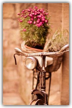 Pinterest el cat logo global de ideas for Guardar bicicletas en el jardin