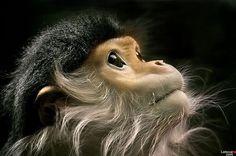beauty monkeys photos - Buscar con Google