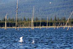 Crane Prairie Lake Oregon