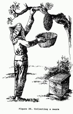 A Bee Keeping Guide - Autonopedia