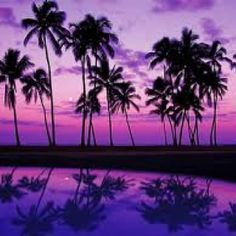 Pretty purple palms