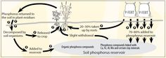 Phosphorus - WA | Fact Sheets | soilquality.org.au