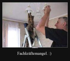 Fachkräftemangel. :) | Lustige Bilder, Sprüche, Witze, echt lustig