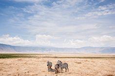 Zebras na borda da cratera. Menção Honrosa na categoria Natureza do Concurso de Fotografia da Nacional Geographic de 2014.  Fotografia: Zik Teo, da  Área de Conservação Ngorongoro, Tanzânia.  http://www.photographyoffice.com/blog/2014/12/national-geographic-2014-photo-contest-winners