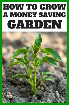 What to Grow in Your Garden to Save You Money This Summer! (how to know which plants will save you the most money!!)