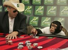 Funny Monkeys - Funny Monkey Picture 007 (FunnyPica.com)