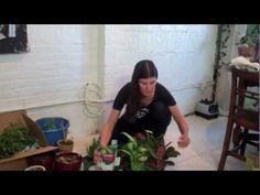 Mason Jar  Indoor Herb Garden -- DIY!