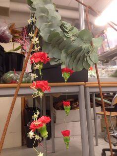 Ranker av Dianthus