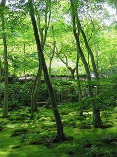 Gio-ji Temple, Arashiyama, Kyoto, Japan, 祇王寺, 嵐山. 京都, 日本