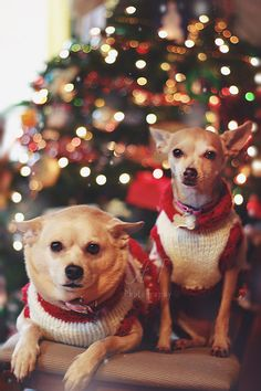 Anny To Photography <3 #dogs #christmas