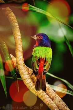 Types Of Cute And Small Birds - What is the smallest bird in the world? Cute and small birds are one of the most interesting creatures on Earth. Pretty Birds, Love Birds, Beautiful Birds, Animals Beautiful, Cute Animals, Vida Animal, Mundo Animal, Small Birds, Colorful Birds
