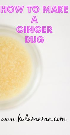 How to make a fermented ginger bug for probiotic health by www.kulamama.com