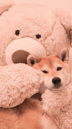 Soft Wallpaper, Bear Wallpaper, Aesthetic Pastel Wallpaper, Aesthetic Wallpapers, Huge Teddy Bears, Peach Aesthetic, Pretty Wallpapers, Cute Icons, Dog Cat