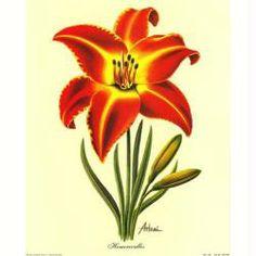 Image 3D Fleur - Lys rouge et jaune 24 x 30 cm