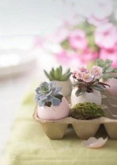 Mini záhradka