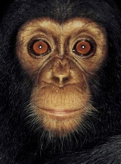 @ Ann Bean   On the radio this morning, I heard a discussion of a shelter for 200 chimps--- The head person knows them all by name. Are teachers harder to tell apart ?