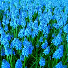 оттенки голубого цвета фото | Photo-Bazar.ru