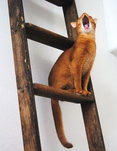 kitten on a ladder